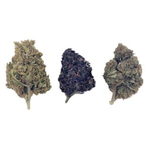 Lot 3 variétés CBD – Indoor